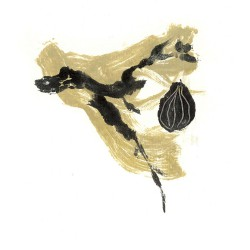 2008 dibujo ilustraciones 17  semilla y cerezo (2)